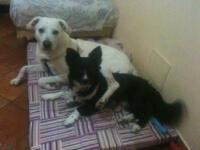 AIUTO!!!! O me o il cane! aiuto!!!! o me o il cane! AIUTO!!!! O me o il cane! 20120531 042349