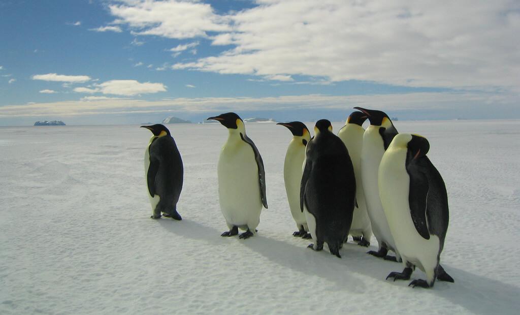 Italia 90 e la marcia dei Pinguini...